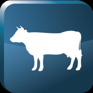 DC_Block_Beef
